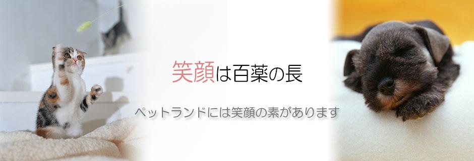 熊本県のペットショップペットランドのトップ画像